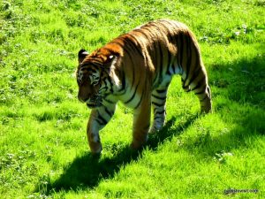 Yorkshire Wildlife Park_Doncaster_08_2019 (92)