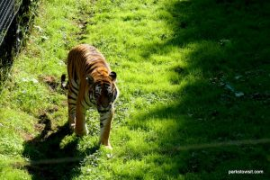 Yorkshire Wildlife Park_Doncaster_08_2019 (94)