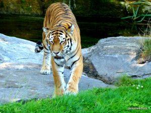 Yorkshire Wildlife Park_Doncaster_08_2019 (96)