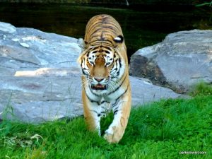 Yorkshire Wildlife Park_Doncaster_08_2019 (97)