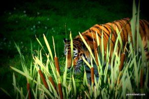 Yorkshire Wildlife Park_Doncaster_08_2019 (98)