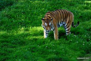 Yorkshire Wildlife Park_Doncaster_08_2019 (99)
