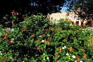 Giardini Pubblici_Cagliari_ Sardinia_092019 (15)