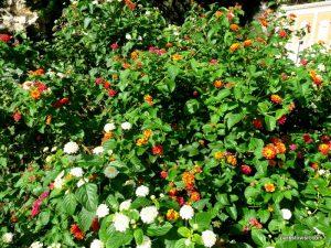 Giardini Pubblici_Cagliari_ Sardinia_092019 (38)
