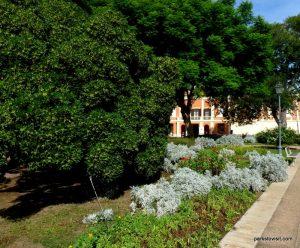 Giardini Pubblici_Cagliari_ Sardinia_092019 (40)