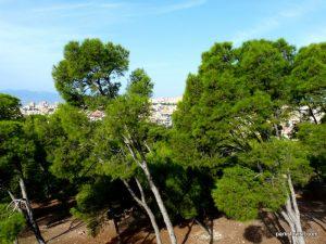 Parco Di Monte Urpinu_Cagliari_Sardinia_09_2019 (35)