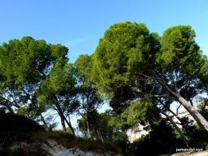 Parco Di Monte Urpinu_Cagliari_Sardinia_09_2019 (61)