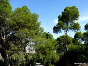 Parco Di Monte Urpinu_Cagliari_Sardinia_09_2019 (70)