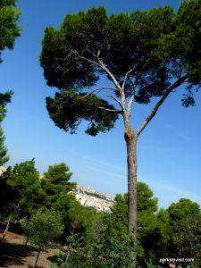Parco Di Monte Urpinu_Cagliari_Sardinia_09_2019 (79)