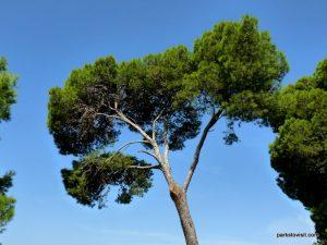 Parco Di Monte Urpinu_Cagliari_Sardinia_09_2019 (80)