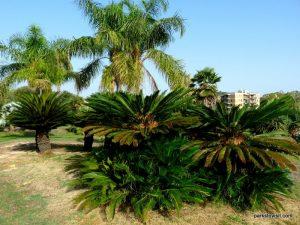 Parco di Monte Claro_Cagliari_092019 (38)