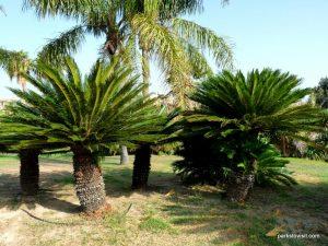 Parco di Monte Claro_Cagliari_092019 (40)