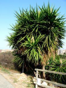 Parco di Monte Claro_Cagliari_092019 (9)