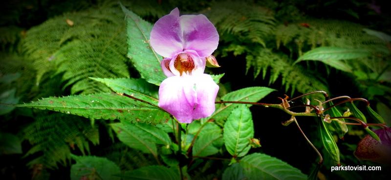 Healey Dell Nature Reserve_Rochdale_09_2021 (10)