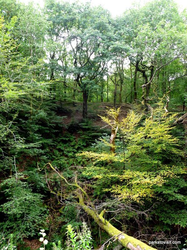 Healey Dell Nature Reserve_Rochdale_09_2021 (24)