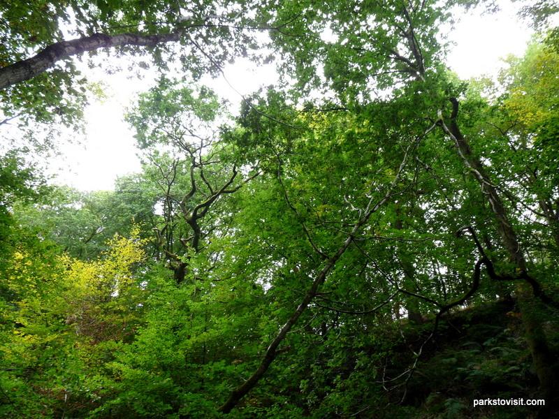Healey Dell Nature Reserve_Rochdale_09_2021 (28)