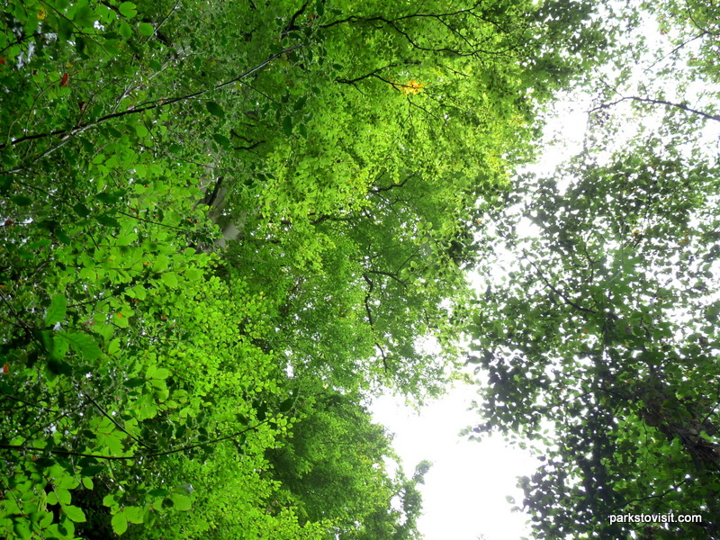 Healey Dell Nature Reserve_Rochdale_09_2021 (30)