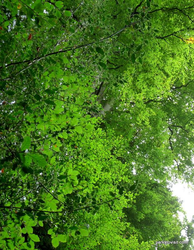 Healey Dell Nature Reserve_Rochdale_09_2021 (31)