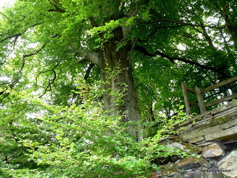 Healey Dell Nature Reserve_Rochdale_09_2021 (32)
