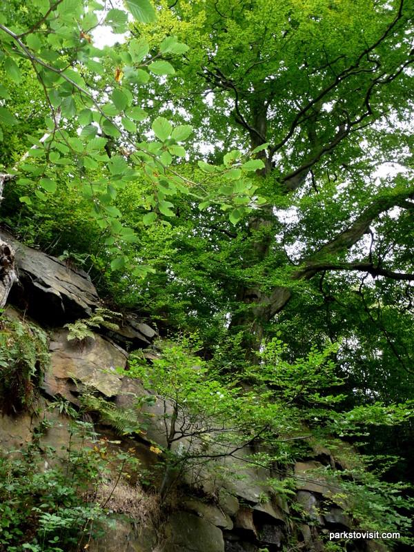 Healey Dell Nature Reserve_Rochdale_09_2021 (33)