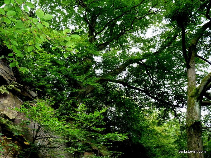 Healey Dell Nature Reserve_Rochdale_09_2021 (34)