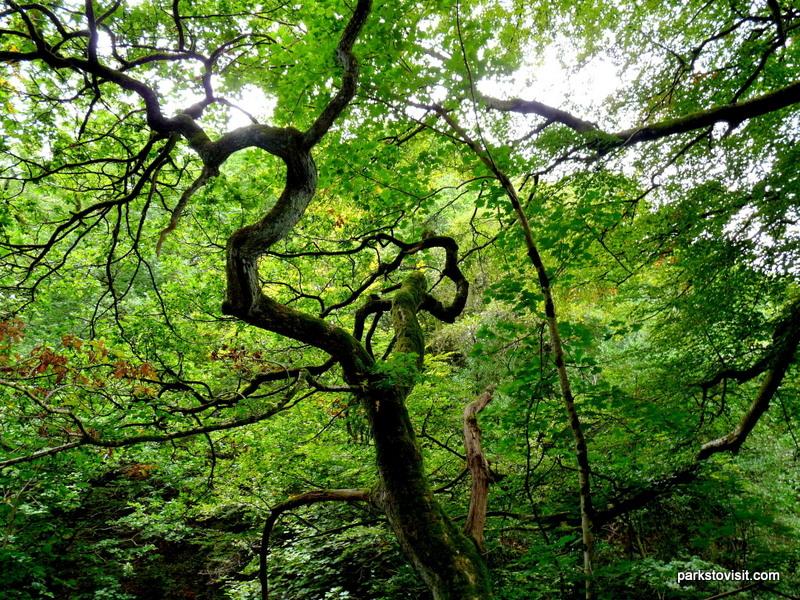 Healey Dell Nature Reserve_Rochdale_09_2021 (35)