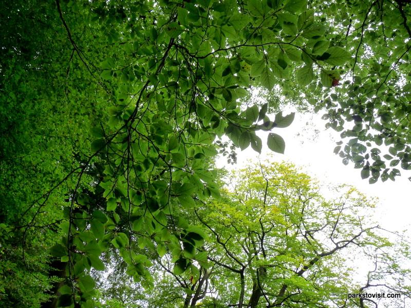 Healey Dell Nature Reserve_Rochdale_09_2021 (37)