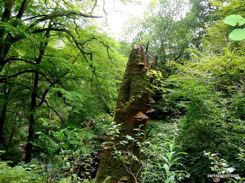 Healey Dell Nature Reserve_Rochdale_09_2021 (38)