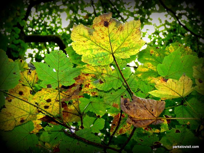 Healey Dell Nature Reserve_Rochdale_09_2021 (42)