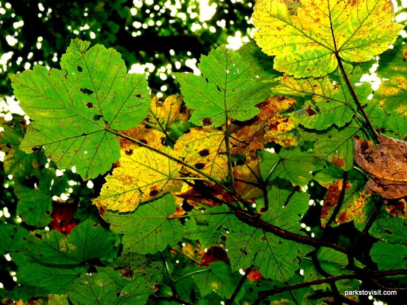 Healey Dell Nature Reserve_Rochdale_09_2021 (43)