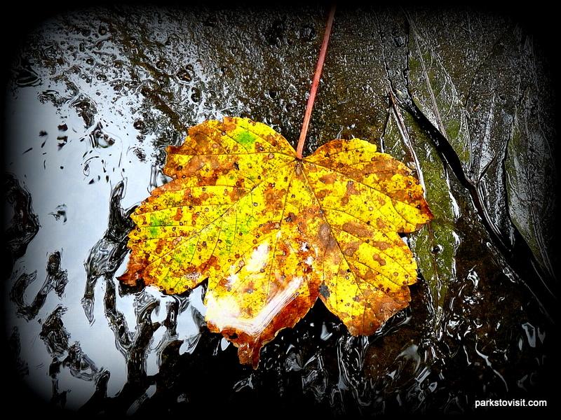 Healey Dell Nature Reserve_Rochdale_09_2021 (46)