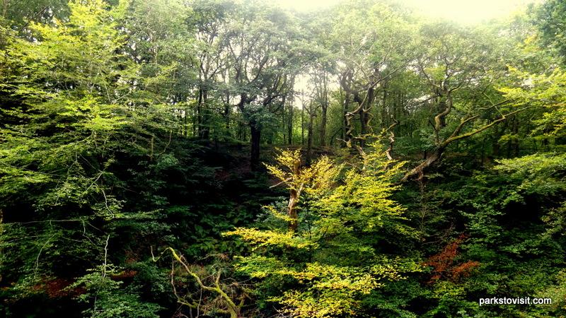Healey Dell Nature Reserve_Rochdale_09_2021 (5)