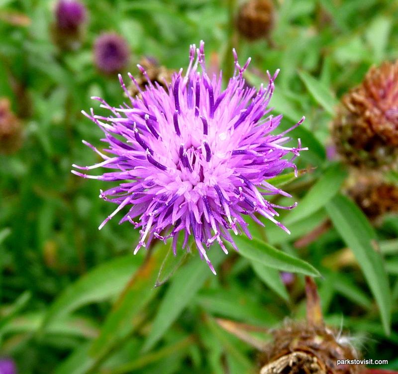 Healey Dell Nature Reserve_Rochdale_09_2021 (57)