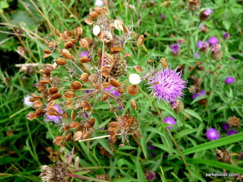 Healey Dell Nature Reserve_Rochdale_09_2021 (59)