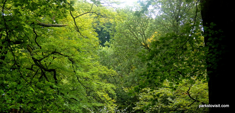 Healey Dell Nature Reserve_Rochdale_09_2021 (6)